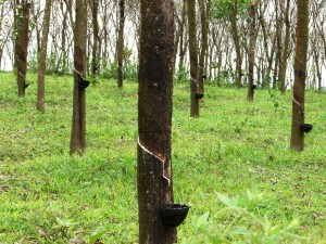 Low Latex Prices Boost Vietnam's Rubber Exports
